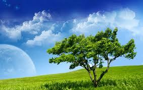 Bosque de la serenidad.